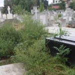 Amendaţi pentru necosirea ambroziei, inclusiv în cimitirele din Timișoara