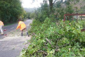Drumarii, la datorie pentru a curăţa şoselele de crengi