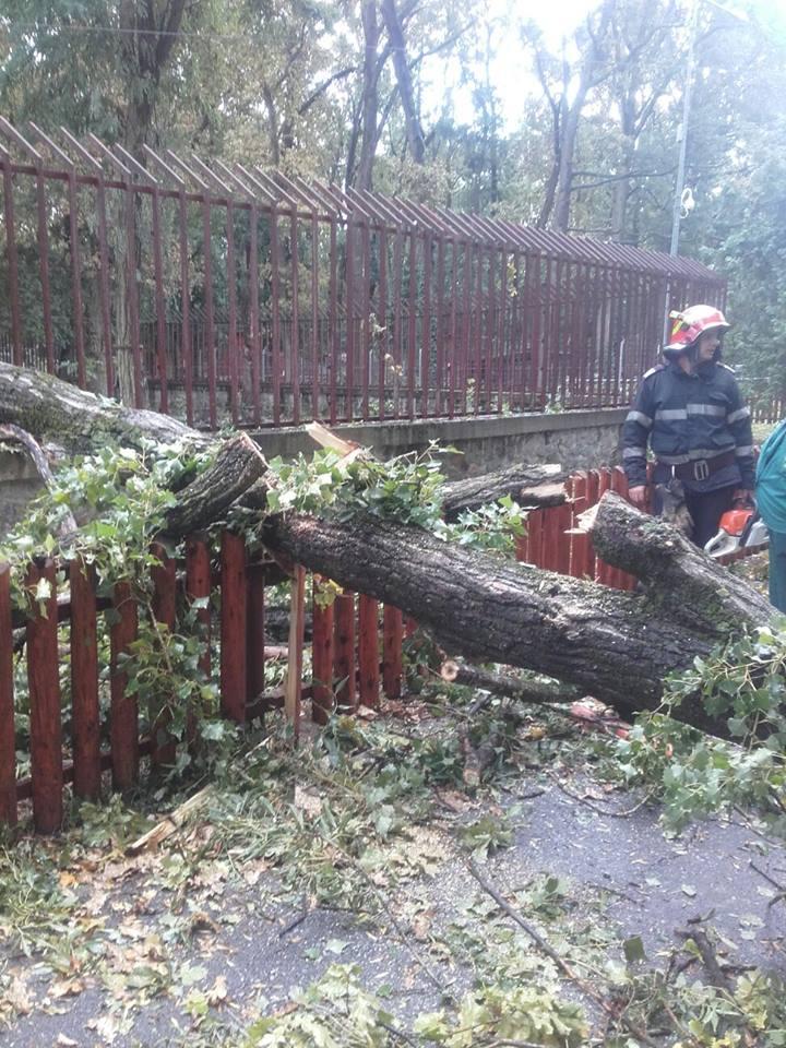 Robu anunţă ce se întâmplă cu lemnul obținut din arborii puși la pământ de furtună