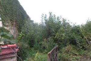 Străinii care deţin terenuri în Timişoara şi-au plătit amenzile şi au cosit buruienile