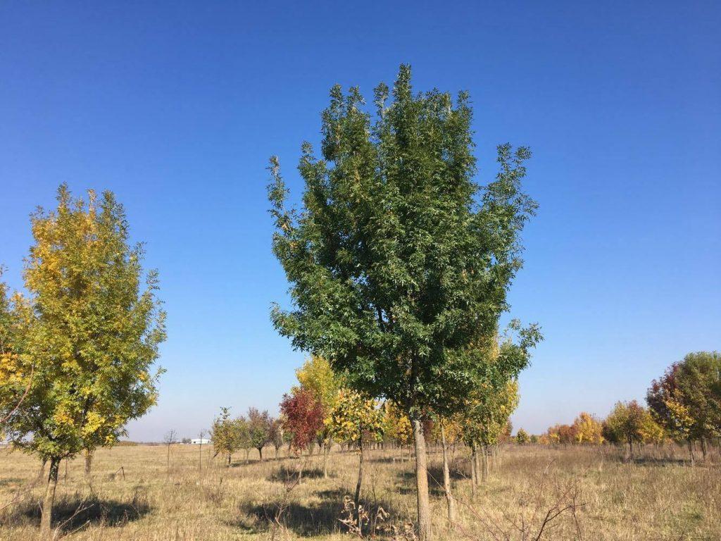 Consiliul Local Timișoara elaborează o hotărâre privind aprobarea măsurilor de protecție a spațiilor verzi pe domeniul public