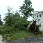 Siemens donează 10.000 euro pentru refacerea parcului central din Buziaș, distrus de furtuna din septembrie