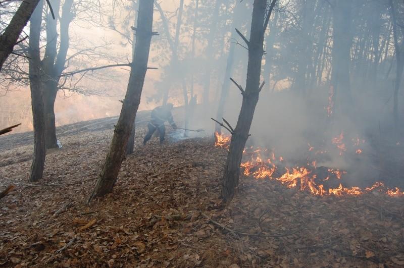 Incendiu în Parcul Domogled-Valea Cernei