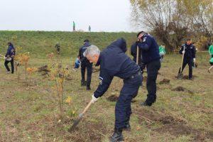 Foto: Jandarmii din Timișoara, voluntari într-o acțiune de împădurire lângă Sânmihaiu Român