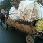 În Timișoara este interzis cu căruța, dar unii insistă! O fi amenda prea mică…