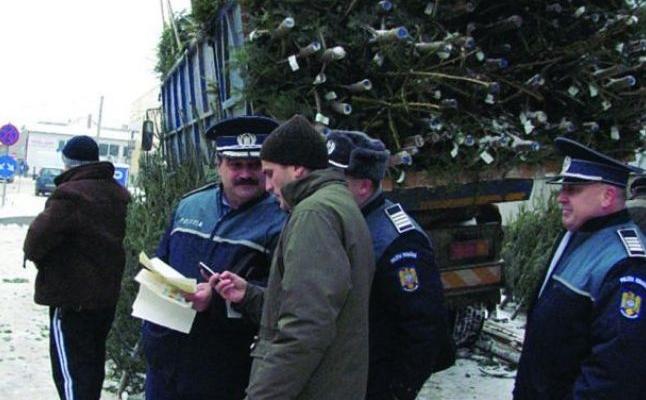 Peste 100 de pomi de Crăciun, confiscați de polițiștii timişeni