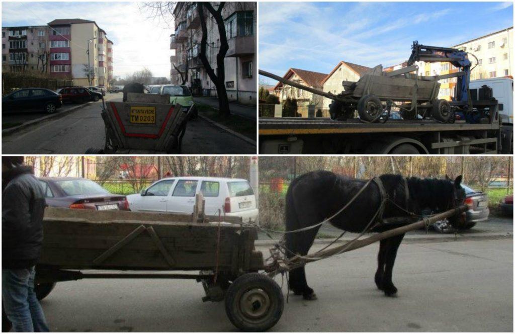 """Cu căruța, ilegal, prin Timișoara! Căruțașii revin deși le sunt ridicate """"vehiculele"""""""