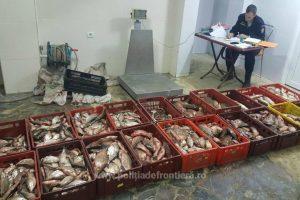 Peşte transportat fără documente, confiscat de poliţiştii de frontieră