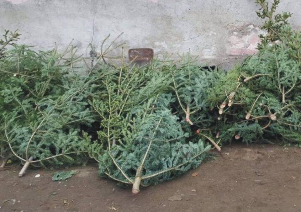 RETIM colectează gratuit brazii de Crăciun