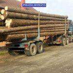 Zeci de metri cubi de lemne, confiscaţi de poliţiştii timişeni
