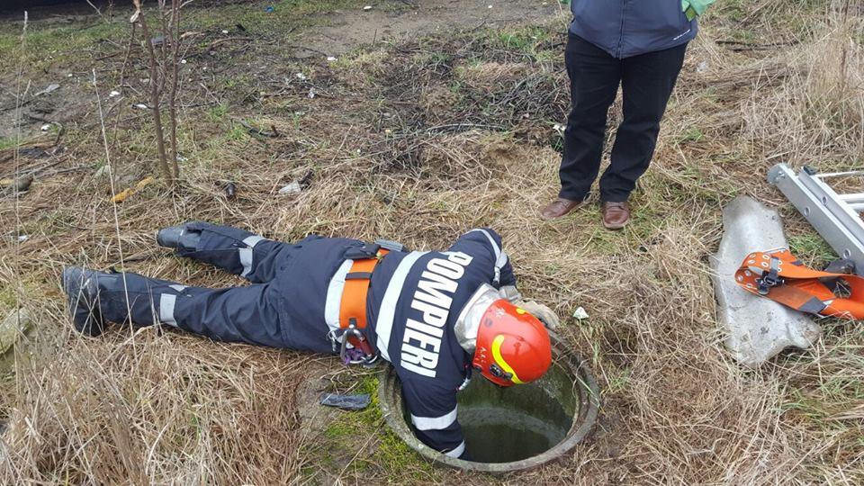 Pompierii au salvat un câine căzut într-un canal din zona Freidorf