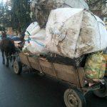 Încălzirea vremii readuce căruțele pe străzile Timișoarei