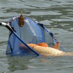 Amenzi usturătoare pentru pescuit ilegal