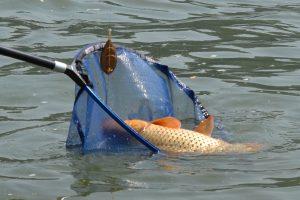 Timişean prins la pescuit cu unelte interzise