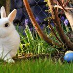 Paştele, între obiceiuri străvechi şi aşteptarea Iepuraşului