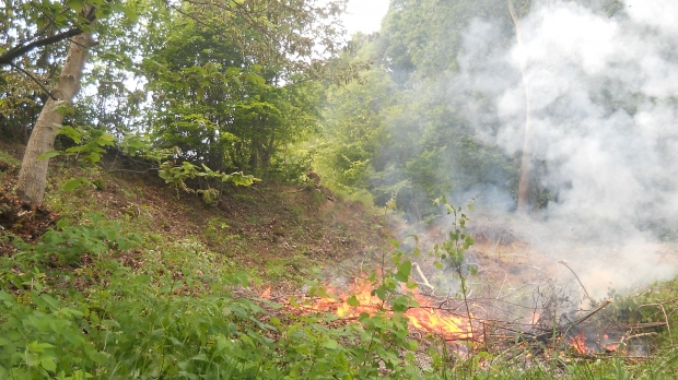 Incendiu în Parcul Național Domogled-Valea Cernei
