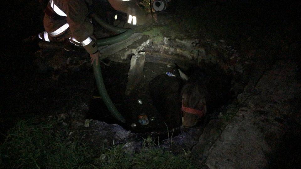 Fiecare viață contează! Pompierii au salvat un cal căzut într-un bazin