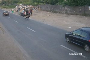 """Video: Gunoaie de oameni! """"Prins"""" cu camerele video în timp ce aruncă deșeuri pe domeniul public"""