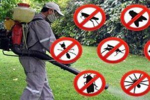 O nouă acțiune de dezinsecție în Giroc şi Chişoda