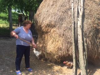 """""""Hai să strângem fânul!"""" la Margina. Un nou proiect turistic se pune la cale în Timiş"""