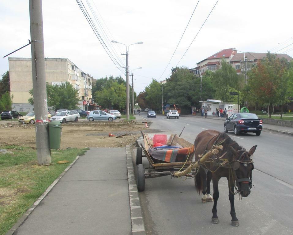 Zeci de vehicule cu tracțiune animală surprinse în prima jumătate a acestui an pe străzile Timișoarei