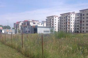Ambrozia, la ea acasă! Doar 35 de amenzi pentru proprietarii care nu își îngrijesc terenurile din Timișoara