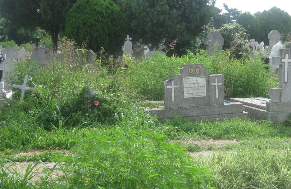 A crescut ambrozia şi în cimitire. Poliţia Locală continuă să-i amendeze pe cei care nu o cosesc