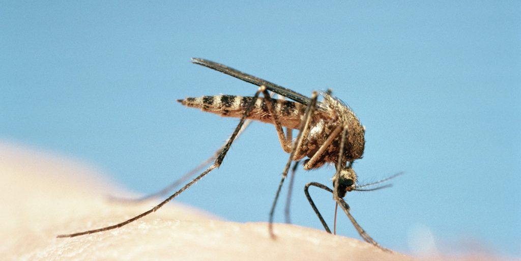 Ministerul Sănătății confirmă: virusul West Nile, prezent în România! Vezi simptomele!
