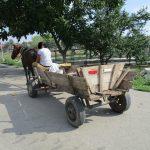 93 de căruțași depistați pe străzile Timişoarei și amendaţi anul acesta de polițiștii locali
