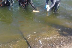 Tragedie în judeţul Arad. Un tânăr de 28 de ani s-a înecat într-un lac