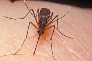 Robu: prezența atât de numeroasă a ţânţarilor nu se datorează nepăsării cuiva, ci condițiilor meteo