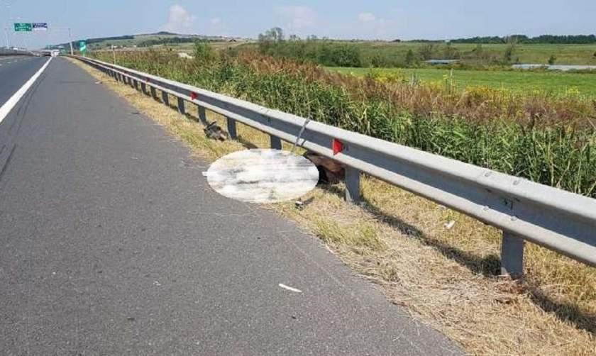 Urs spulberat de un camion, pe autostrada Sibiu-Orăştie