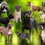 Deținătorii de câini periculoși sau agresivi, în atenția polițiștilor