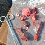 Ce măsuri iau autorităţile după confirmarea pestei porcine africane la mistreţi
