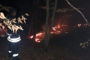 Au ars patru hectare de pădure la Pogănești