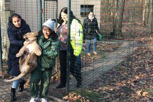 Puiul de leu Paco a plecat spre Grădina Zoologică din Târgu Mureş