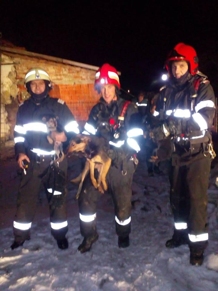 Doi căţei au pierit într-un incendiu la Bacova. Cinci au fost salvaţi de pompieri