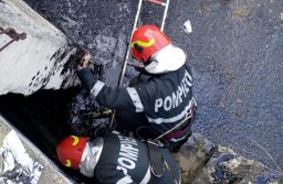 Trei suflete nevinovate salvate de la moarte de pompieri