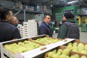 Încep licitațiile pentru primul centru de legume și fructe din Timiş