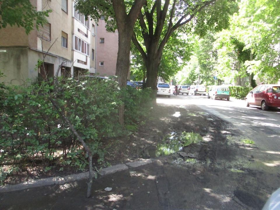 E plin de deşeuri în cartierele Aradului Est și Vest
