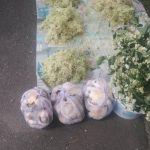Mare grijă de unde cumpăraţi ciuperci!