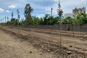 Continental Anvelope a investit 240.000 euro pentru o perdea forestieră