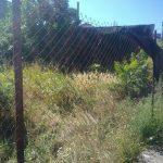 Locuitorii orașului Buziaș spun STOP ambroziei!