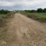 O firmă contractată de CJT va repara drumul dintre Parța și Petroman