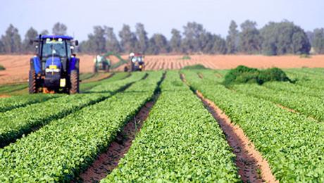 Strategie europeană pentru ca alimentele să ajungă de la fermă la consumator