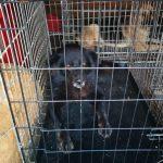 Primăria Timișoara va organiza 5 târguri de adopție a câinilor aflați în adăpostul public