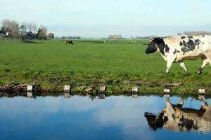 Ce se poate face pentru protecţia apelor împotriva poluării cu nitraţi din surse agricole