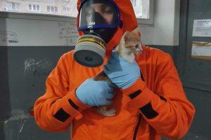 """Ce a dispus Ministerul Sănătăţii pentru """"Blocul Morţii"""". Două pisici au fost salvate"""