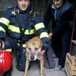 Intervenţie dificilă de salvare a unui patruped căzut în fântână