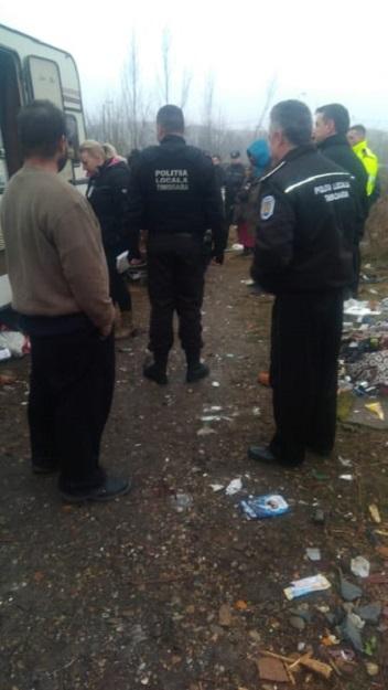Cuib de boschetari distrus de poliţiştii locali la Timişoara